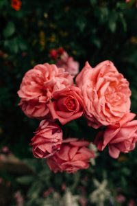 roses compassion